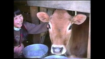 Lessons from a Calf