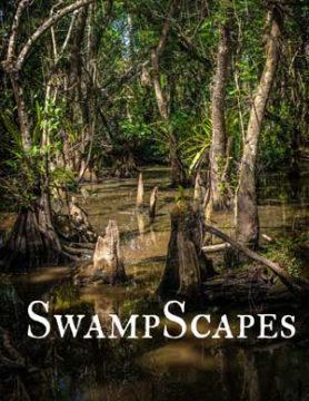SwampScapes