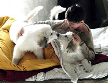 Belle And Sebastian, Friends For Life